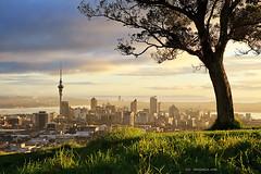 Big Tree,  Little City (Chris Gin) Tags: newzealand sunrise auckland nz mounteden mteden