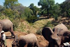 Victoria Falls_2012 05 24_1659 (HBarrison) Tags: africa hbarrison harveybarrison tauck victoriafalls zimbabwe zambeziriver mosioatunya