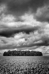 trees (Nachosan) Tags: trees bw ny storm field landscape corn nikon farm country d200 drama