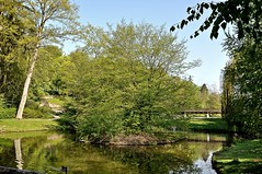 Kleiner Teich im Kurgarten Bad Nauheim (GelsenBuer) Tags: park tree green water germany deutschland duck hessen grn ente bume baum reflektionen badnauheim spiegelungen kurpark reflectrions spiegeleien treeswasser