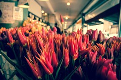 Tulip Dance (Jannaface) Tags: seattle city pink flowers red portrait orange plants plant blur flower building tree classic love nature public floral colors beautiful leaves silhouette gardens closeup fairytale contrast canon outside outdoors happy leaf petals spring interesting blurry bush focus colorful downtown pretty day shadows purple tulips natural market bokeh sale earth walk unique background blossoms perspective fresh depthoffield clean adventure pot pots growth hues dreams bloom wa bouquet pikeplacemarket 365 manual daydreaming orangeglow vibrantcolors 2013 eosrebelt1i 55mmf3556is