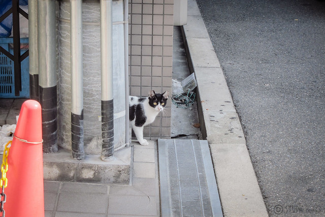 Today's Cat@2013-05-31