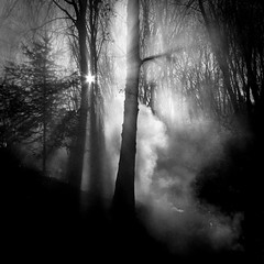Smoke (GibsonVisuals Photography) Tags: california trees blackandwhite tree silhouette forest fire smoke misc backlit placerville sunrays