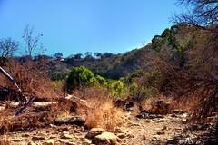 A Dried up Creekbed in Barton Creek (thor_mark ) Tags: trees homes nature austin texas unitedstates blueskies bartoncreekgreenbelt hillsides project365 drycreekbed colorefexpro nikond800 driedupcreekbed jan2013