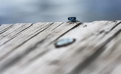 Heya! (chiefeile) Tags: blue macro water canon lens photography photo zoom micro macr