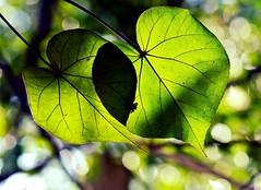 Promise 约定 (Anna Kwa) Tags: art nature leaves singapore bokeh 105mm naturereserves 约定 sungeibulohwetland