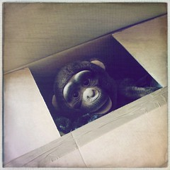 (206/366) (Cathy G) Tags: gerald gorilla toy iphone iphone5 iphoneography 366 206366 packing box squareformat home