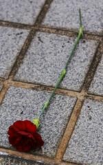 Fallen Rose (Hayden Watkins) Tags: rose japan tokyo pavement sony 350 alpha a350