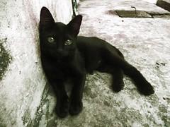 si rimau (PieceOfMindArt) Tags: animal cat nikon coolpix s3000