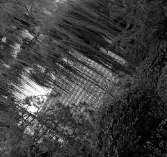 sway. (jonathancastellino) Tags: leica trees plant toronto building tree bush apartment angle hole gerrard through weepingwillow bushes