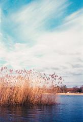 lake gedern (Reichert.Michael) Tags: leica film nature analog 35mm germany landscape iso400 m2 voigtländer gedern plustek farbwelt exspired 7600i hwluxx