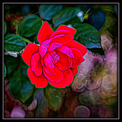 Knock Out Rose (Topaz Glow) (gtncats) Tags: pink red abstract rose outside outdoors bloom topaz aoi knockoutrose ef70300mm canon70d photographyforrecreation infinitexposure topazglow