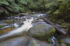 Toorongo River (N.Boersma) Tags: wood motion fern nature water rock canon river moss mt amphitheatre falls tokina mount 7d mkii baw 1116 toorongo