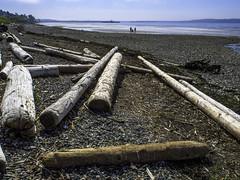 Beach owners (Tony Tomlin) Tags: bc logs driftwood whiterock whiterockbeach