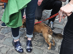 Dog: Marriage Referendum: In The Upper Yard, Dublin Castle (Skyroad) Tags: