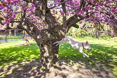 Raining Dogs (niznoz) Tags: nyc ny newyork spring centralpark gothamist