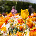 """2015_Floralia_Brussels-33 • <a style=""""font-size:0.8em;"""" href=""""http://www.flickr.com/photos/100070713@N08/17643975758/"""" target=""""_blank"""">View on Flickr</a>"""