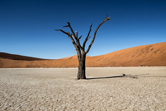 Solitary Tree in Deadvlei, Namibia (Shuo Photography) Tags: africa park old city blue red summer sky urban orange brown mountain plant black mountains hot tree tourism nature beauty weather table landscape dead outside death town sand scenery branch desert outdoor head african south dune hill salt dry hills adventure national heat western cape lonely desolate namibia namib deadvlei