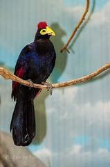 DSC_2184 ts (Photos by Kathy) Tags: cincinnatizoo animals zoo zoos nature kathymoore nikon2000 bird