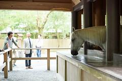 20160917 Ise 8 (BONGURI) Tags:    jp  horse    shrine sintoshrine  isejingu jingu   naiku  koutaijingu  tenshokoutaijingu  amaterasimasusumeoomikami  ise  mie  nikon df afsnikkor50mmf18gspecialedition