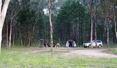 Inverell Camp (Kaptain Kobold) Tags: kaptainkobold lake water copeton inverell nsw australia camp campsite treet tent car