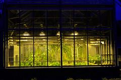 Gewchshaus (dcs 0104) Tags: biologie gewchshaus biology pflanzen planten fleur flora nikon d5100 nikkor 18 35mm g dx