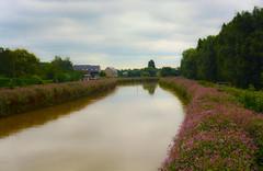 Nature. (ost_jean) Tags: nature flowers landscape colors nikon d5200 afs dx nikkor 35mm f18g ostjean belgium belgique belgie
