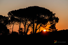 Silhouette of a tree with sunset (grobler.inus) Tags: mountain landscape telephoto telephotolandscape distantsubject perspective scene zoom nature photography landscapephotography naturephotography trees clouds sun light silhouette photo