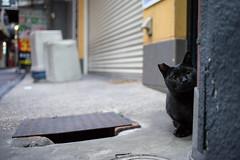 (23fumi) Tags: ilce7m2 sony mc11 40mm canon cat street ef40mmf28stm    osaka tsuruhashi alley morning
