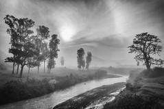 Misty Meadows. (Padmanabhan Rangarajan) Tags: araku villagers tribal rural india vizag valley nature scenery portraiture paddy