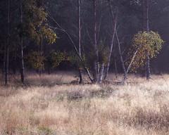Weight (jellyfire) Tags: sonnartfe55mmf18za sony sonya7r sonyfe70200mmf40goss suffolk thetford thetfordforest water woodland ze zeissdistagont18mmf35ze atmospheric autumn autumncolour trees unitedkingdom waves wwwleeacastercom zeiss