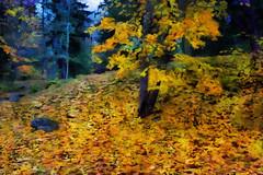 Walking Path in Autumn Park 2 (Kalev Vask.) Tags: digital kalevvask postproccessed dap estonia photomanipulation digiart photoart park autumnpalmse golden october