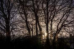 DSC- 0024 - Dawn on the canal (SWJuk) Tags: swjuk uk unitedkingdom gb britain england lancashire burnley home canal leedsliverpoolcanal water reflections light sunlight dawn sunrise trees branches reflection inverted flipped towpath 2016 dec2016 winter outdoor nikon d7100 nikond7100 18300mm rawnef lightroom