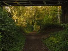 path under the bridge (Johnson Cameraface) Tags: 2016 october autumn olympus omde1 em1 micro43 mzuiko 1240mm f28 johnsoncameraface doncaster southyorkshire pottericcarrnaturereserve pottericcarr yorkshirewildlifetrust ywt walking path nature naturereserve bridge