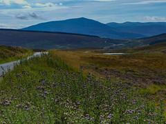 P1630414 (Jrgen Friedlein) Tags: 2016 grosbritannien landschaft queenelizabethforestpark schottland