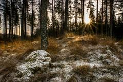 Sun rays spreading warmth on a cold winter morning... (kashefreza) Tags: nature rock sunlight sunray tree winter