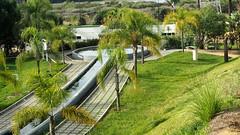 2237   Parque Botnico Celestino Muti, La Rbida,  Huelva (Ricard Gabarrs) Tags: parque paseo parquebotanico arboles natura botanica olympus naturaleza ricardgabarrus ricgaba verdor