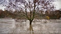 Torino (29) (cattazen.com) Tags: alluvione torino po esondazione parcodelvalentino murazzi pienadelpo cittditorino turin piemonte