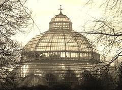 Palm House, Sefton Park (lesleyw8) Tags: palm house sefton park liverpool glass