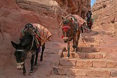 - (spice_) Tags: travel digital canon eos petra middleeast sigma jordan 18200 ヨルダン 中東 400d kissx ぺトラ ぺトラ遺跡