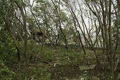 ป่าชายเลน