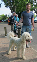 Monty (ohange2008) Tags: uk england dog bandstand labradoodle essex southendonsea priorypark