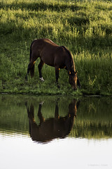 Photo of Reflections of a Sunlit Prairie