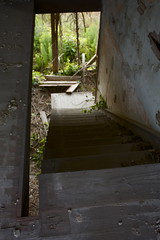 stairs of a broken home (peculiarnothings) Tags: old house abandoned overgrown stair decay descent