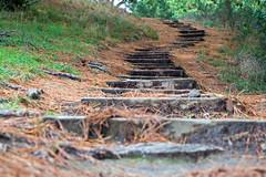 Steps (Flimin) Tags: park canon moss path steps wellington mountvictoria gamewinner 650d challengeyouwinner gamex2winner rebelt4i