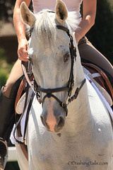 Summer Snow (Alise Lamoreaux) Tags: horse horseracing equestrian thoroughbred equine ottb