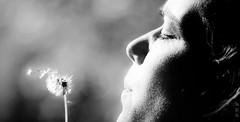 Make a wish :) (Vincenzo DC) Tags: bw flower nature blackwhite profile dreaming wishing