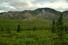 Denali National Park , AK, Summer (faungg's photos) Tags: trip travel trees summer vacation sky usa mountains west nature alaska landscape us scenery scenic ak western 夏 旅游 gree onroad 美国 西部 在路上 自驾游