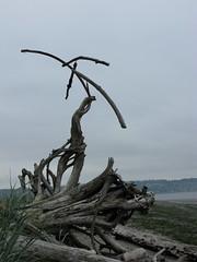 Whale Bones (Shiftwood Sculpture) Tags: travel sculpture plants art beach nature animals river landscape photography mobiles northwest driftwood