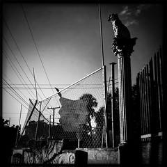 (keylargo_diver) Tags: bw unitedstates florida miami streetphotography fl southflorida iphone magiccity keylargodiverflickrcom iphone4 hipstamatic